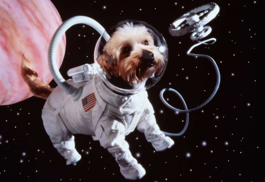 A puppy in an astronaut costume in space.